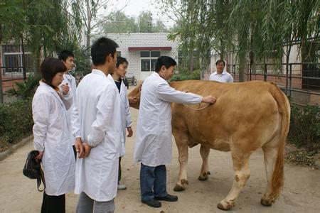 畜牧兽医专业